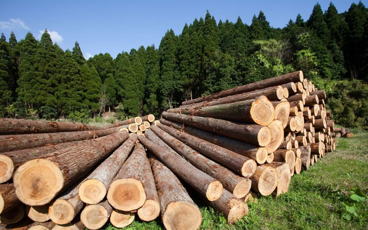 СБУ задержала на взятке лесника, который незаконно продавал древесину