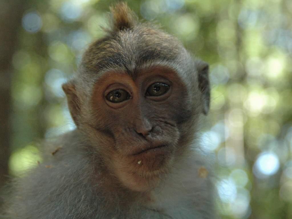 В Китае поймали обезьяну, которая регулярно воровала еду из жилых домов