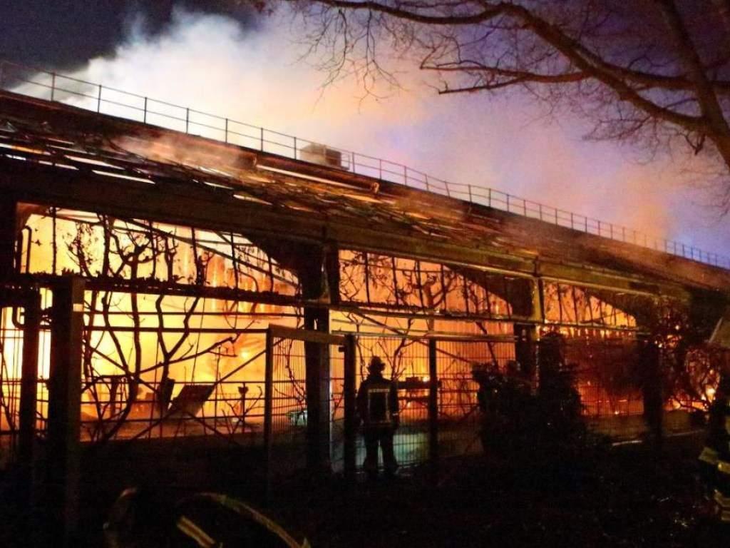 Новогодние небесные фонарики стали причиной пожара в немецком зоопарке