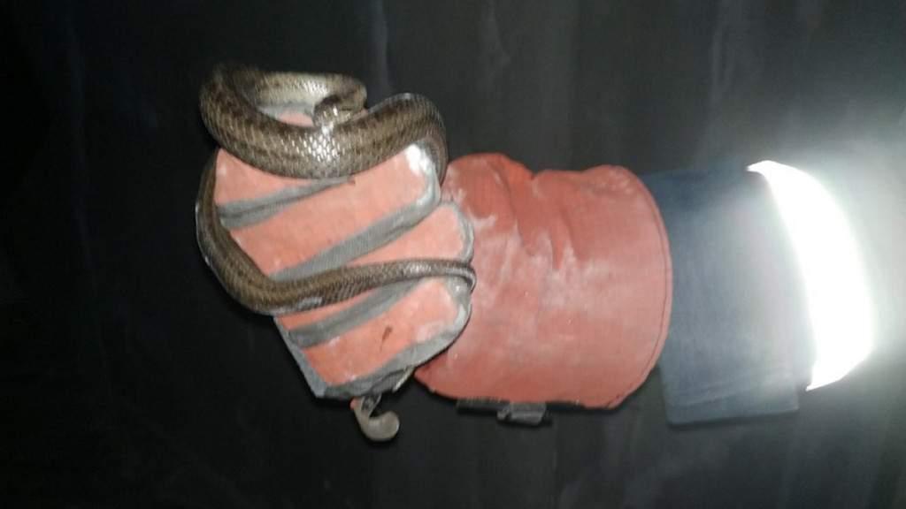 В Днепре женщина обнаружила у себя в комнате змею