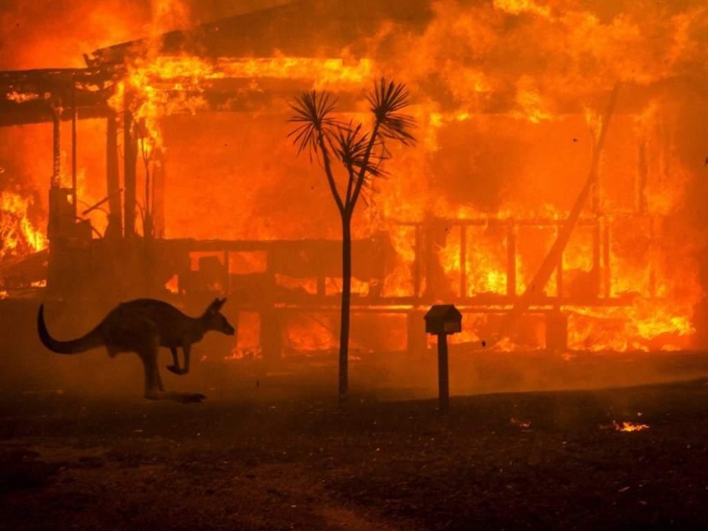 В Австралии из-за постоянных пожаров погибли около миллиарда животных