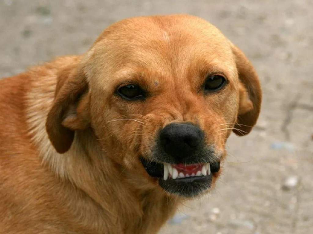 Бродячая собака напала на  девочку в Харькове