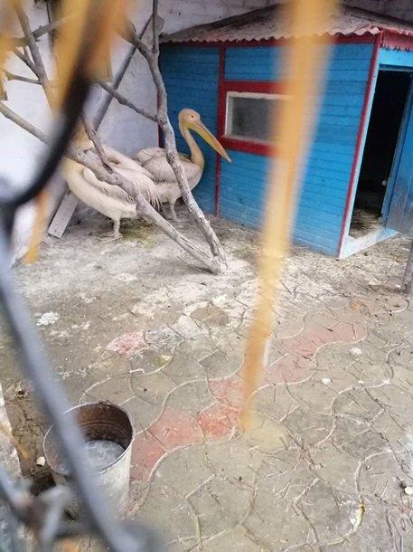 В Харьковской области обнаружили в зоопарке истощенных  животных (ФОТО)