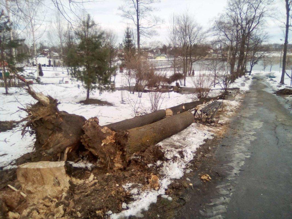 На Западе Украины мощный ветер сносит деревья(ФОТО, ВИДЕО)