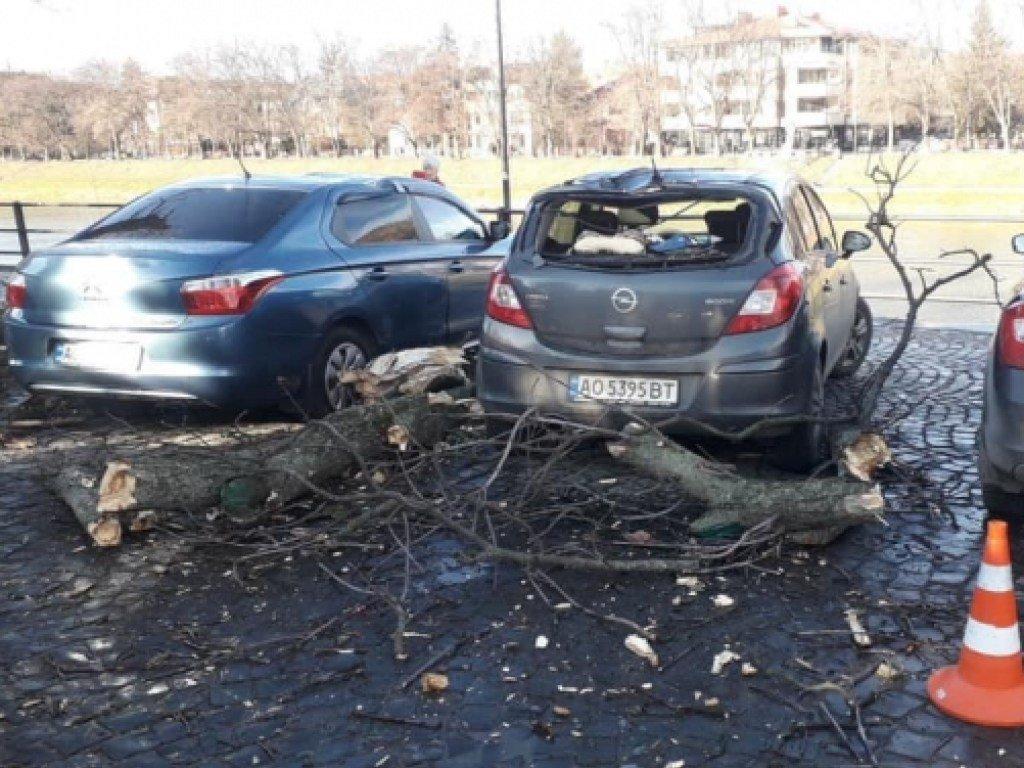 В Ужгороде ветер повалил дерево на машины, которые стояли рядом(ФОТО, ВИДЕО)