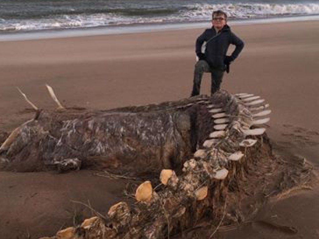 В Шотландии во время шторма на берег выбросило огромный скелет  чудовища