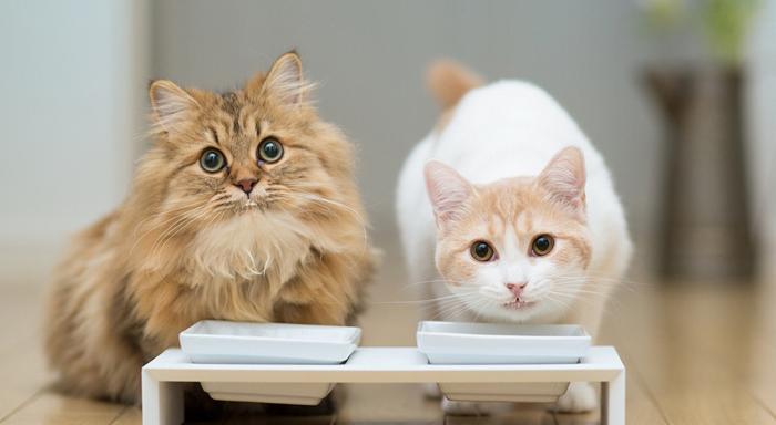 Как правильно подобрать витамины для кошки