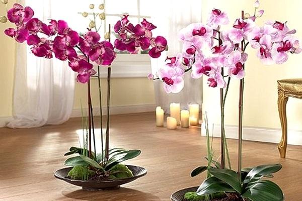 Орхидеи для вашего прекрасного настроения