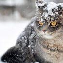 Погода в Украине: от сильных морозов на востоке до потепления на западе