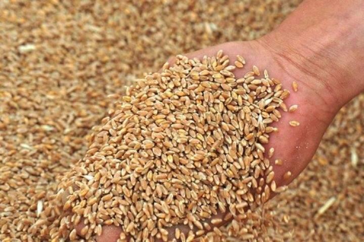Украина экспортировала около 30 миллион тонн зерна