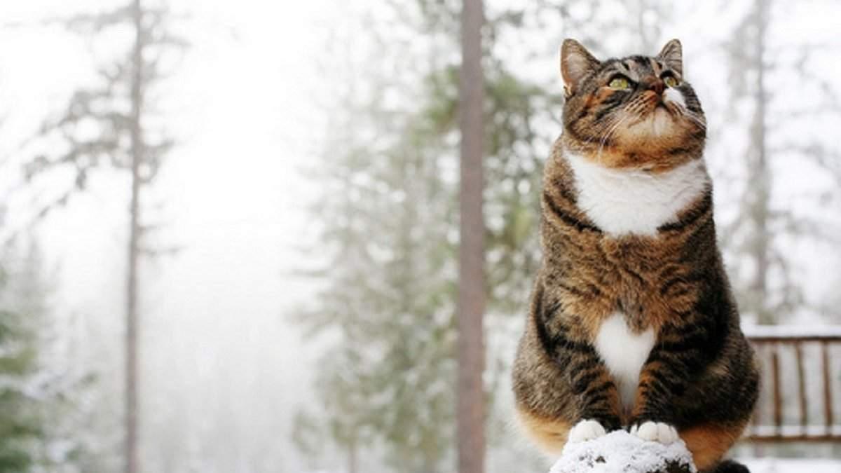 Завтра в Украине ожидается резкий перепад температуры и снежные метели