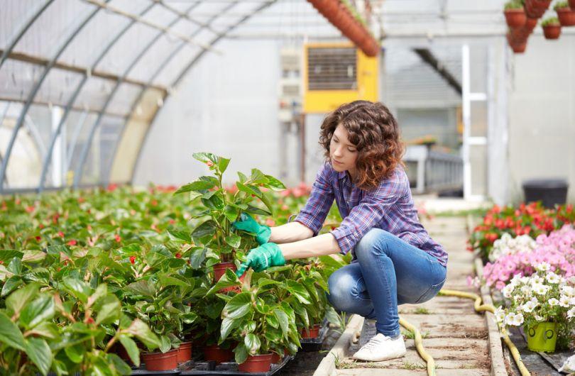 Купить теплицу для выращивания зелени, овощей и цветов